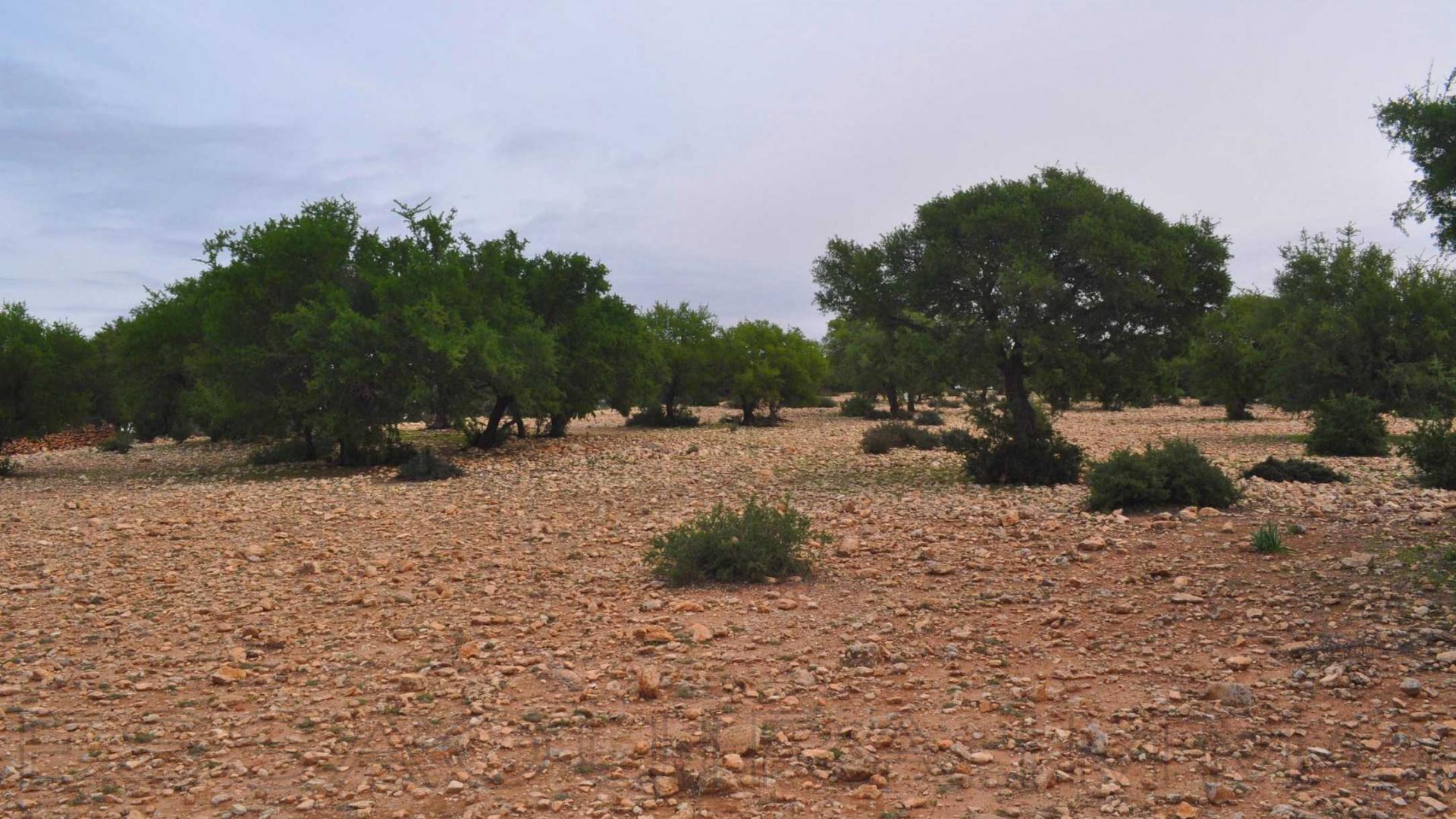 terrain en vente à essaouira